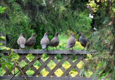 birds-more-bus-tour