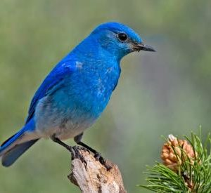 Bluebirds, Vistas and Vines