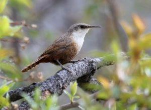 cottonwoods-birding-tour